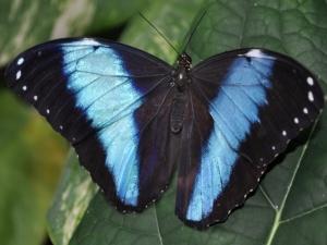 Kecantikan kupu: hasil perjuangan metamorfosa