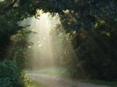Cahaya mentari: rakhmat Tuhan bagi semua
